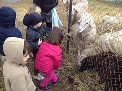Infantil visita la granja el Acebo