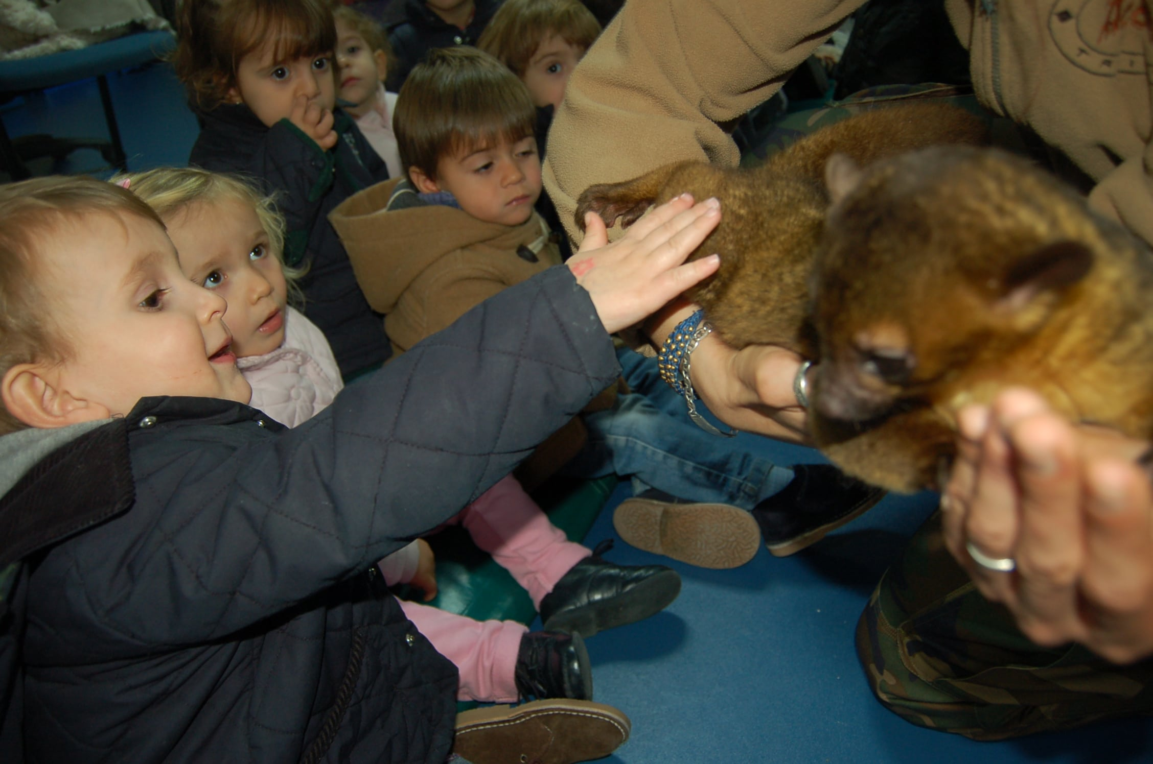 animales-granja-colegio-madrid (82)