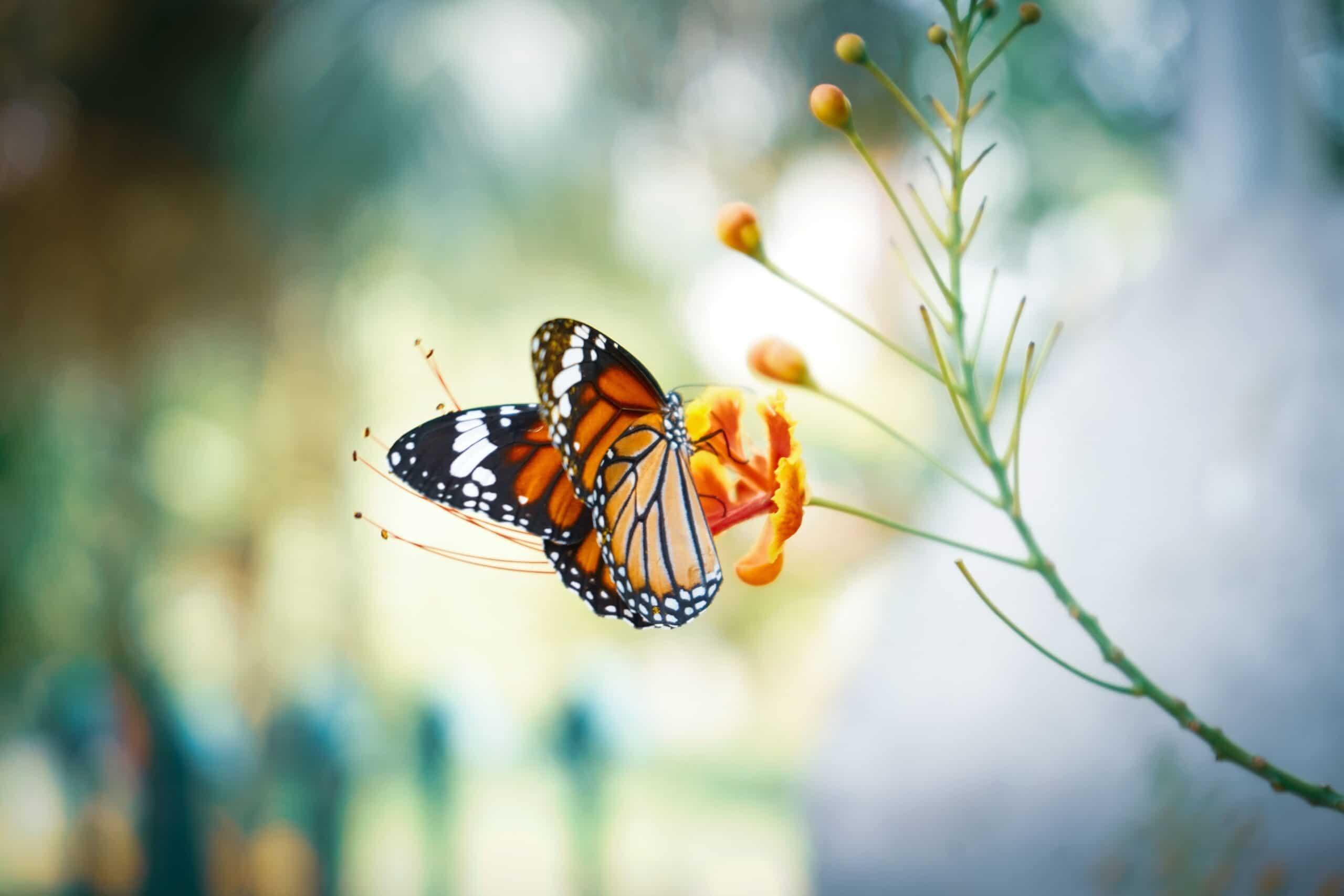 mariposa scaled